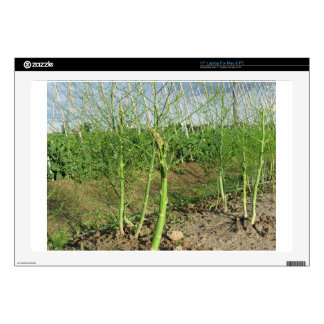 Asparagus shoot just before becoming woody laptop skin