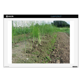"""Asparagus shoot just before becoming woody skins for 17"""" laptops"""
