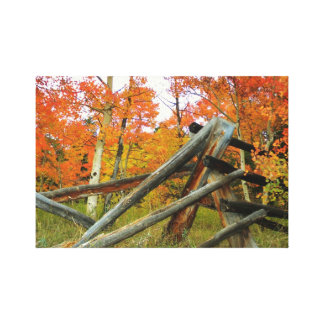 Aspen and Fence in Fall - Stretched Canvas Prints