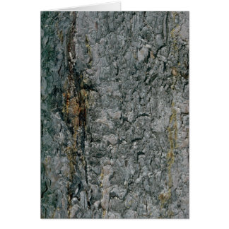 Aspen bark, yellow and grey card