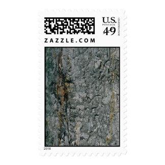 Aspen bark, yellow and grey postage