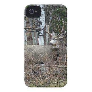 Aspen buck iPhone 4 case