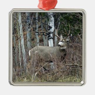 Aspen buck square metal christmas ornament