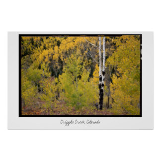 Aspen Foliage, Cripple Creek, Colorado Poster