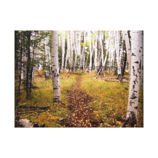 Aspen Forest in the fall Canvas Print