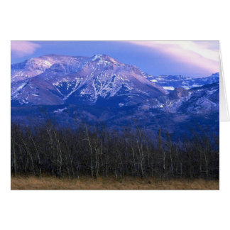 Aspen forest in the Rocky Mountain Foothills, Albe Greeting Card