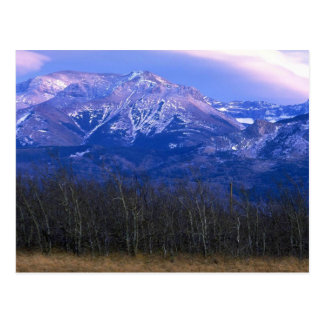 Aspen forest in the Rocky Mountain Foothills, Albe Postcard