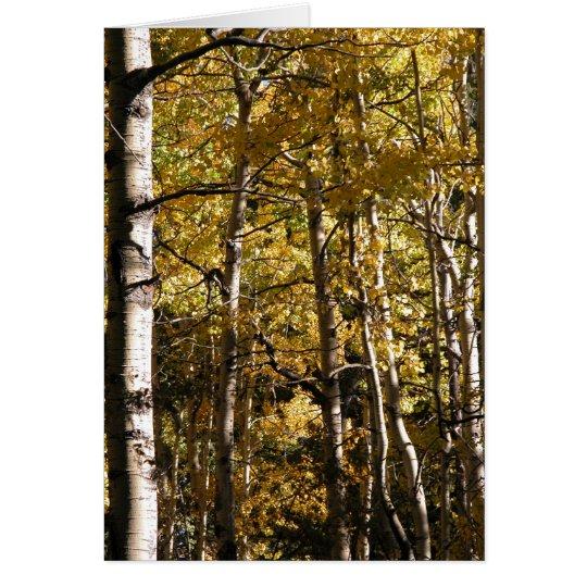Aspen Gold Card