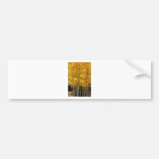 Aspen Gold Portrait Bumper Sticker