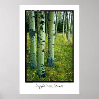 Aspen Grove, Cripple Creek, Colorado Poster