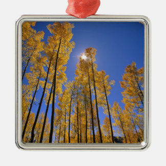 Aspen grove in autumn in the San Juan Range of Metal Ornament