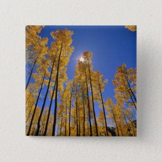 Aspen grove in autumn in the San Juan Range of Pinback Button