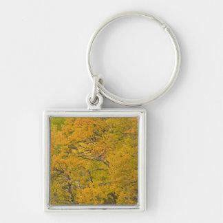 Aspen grove in peak fall colors near East Silver-Colored Square Keychain