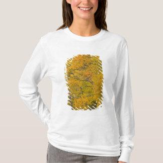Aspen grove in peak fall colors near East T-Shirt