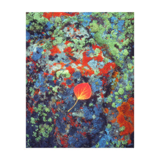 Aspen leaf on a lichen covered rock canvas print