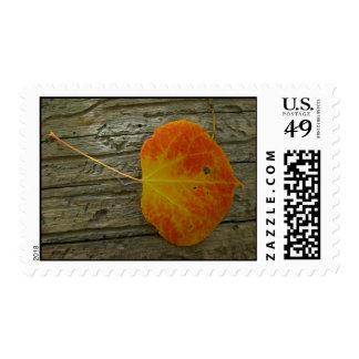 Aspen leaf on wood postage