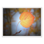 Aspen Leaf Points the Way Poster