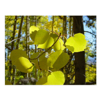 Aspen leaf postcard