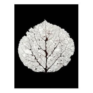 Aspen Leaf Skeleton 1 Postcard