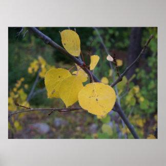 Aspen Leaves Posters