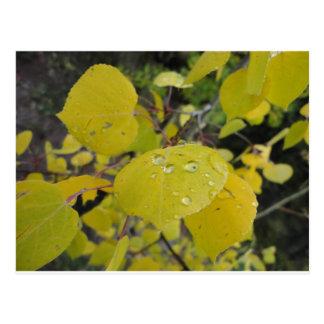 aspen raindrop postcard