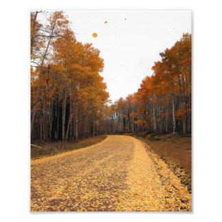 Aspen Road Photo Print
