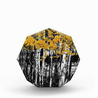 Aspen Touch of Orange Acrylic Award