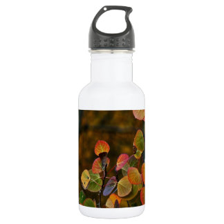 ASPEN TREE BRANCHES WITH FALL COLORED LEAVES STAINLESS STEEL WATER BOTTLE