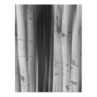 Aspen Tree Colonies Dreaming BW Postcard