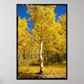 Aspen Tree, Cripple Creek, Colorado Poster