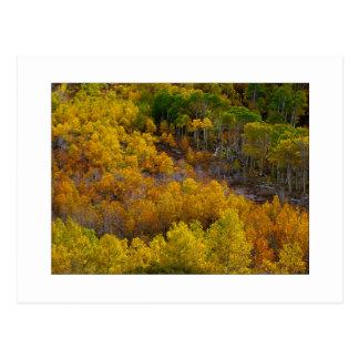 """""""Aspen Tree Hill"""" Postcard"""