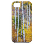 Aspen Tree Magic iPhone 5 Cover