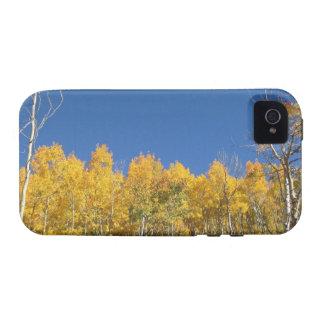 Aspen Trees, Colorado iPhone 4 Cases