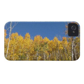 Aspen Trees, Colorado iPhone 4 Cover