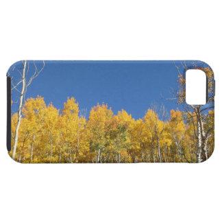 Aspen Trees, Colorado iPhone 5 Cover