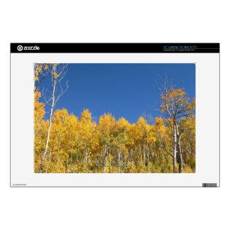 Aspen Trees, Colorado Laptop Decal
