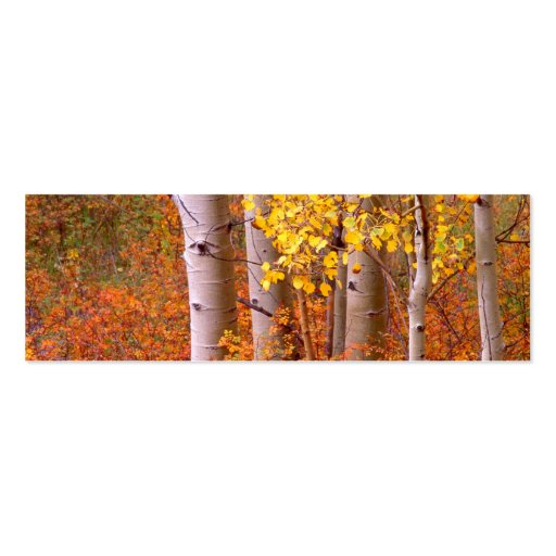 Aspen trees in Autumn Business Card Templates