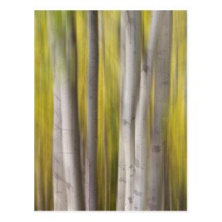 Aspen Trees in Autumn Color Portrait Dreaming View Postcard
