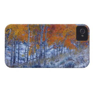 Aspen trees in Fall colors, Bighorn Mountains, iPhone 4 Case-Mate Case