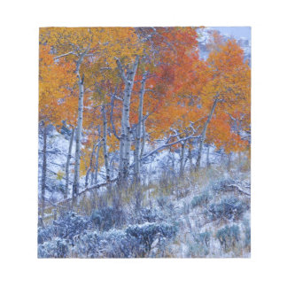 Aspen trees in Fall colors, Bighorn Mountains, Notepad