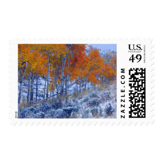 Aspen trees in Fall colors, Bighorn Mountains, Postage