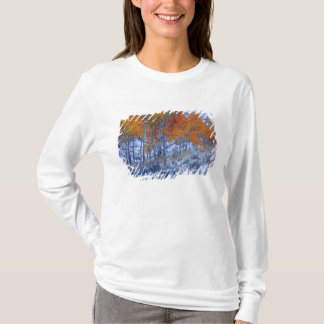 Aspen trees in Fall colors, Bighorn Mountains, T-Shirt