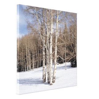 Aspen Trees in Snow Canvas Print