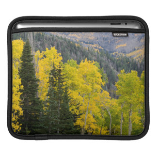 Aspen Trees (Populus Tremuloides) And Conifers 2 Sleeve For iPads