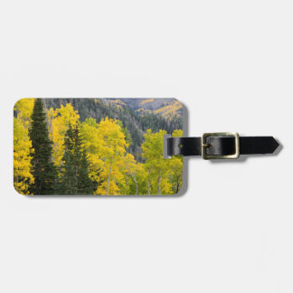 Aspen Trees (Populus Tremuloides) And Conifers 2 Tag For Luggage