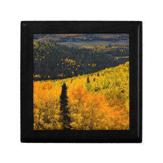 Aspen Trees (Populus Tremuloides) And Conifers Jewelry Box