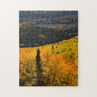 Aspen Trees (Populus Tremuloides) And Conifers Jigsaw Puzzle