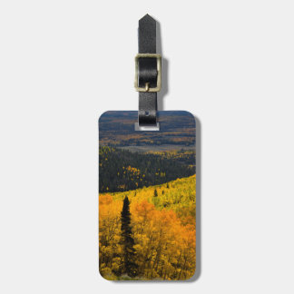 Aspen Trees (Populus Tremuloides) And Conifers Luggage Tag