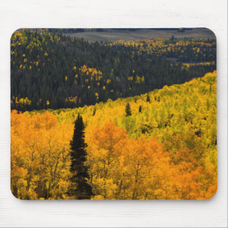 Aspen Trees (Populus Tremuloides) And Conifers Mouse Pad