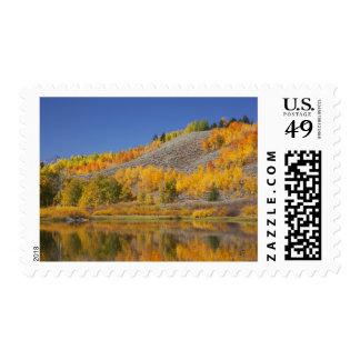 Aspen trees reflected in Snake River Stamp